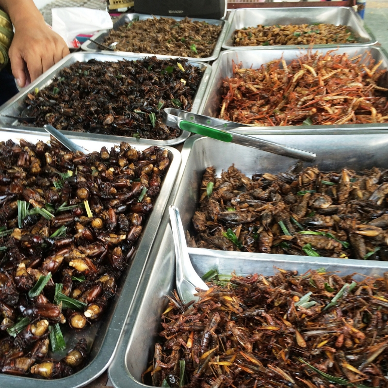 A Buggy Buffet Including Roasted Grasshoppers and Crickets in Bangkok by the Chao Phraya River.