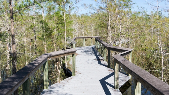 Walk this Boardwalk in Everglades National Park and #FindYourPark.