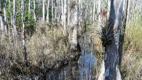 Big Cypress National Preserve, Fla.