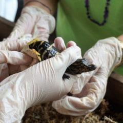 7 of the Best Festivals Celebrating Florida Wildlife