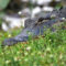 Everglades National Park is Open During the Federal Government Shutdown But…
