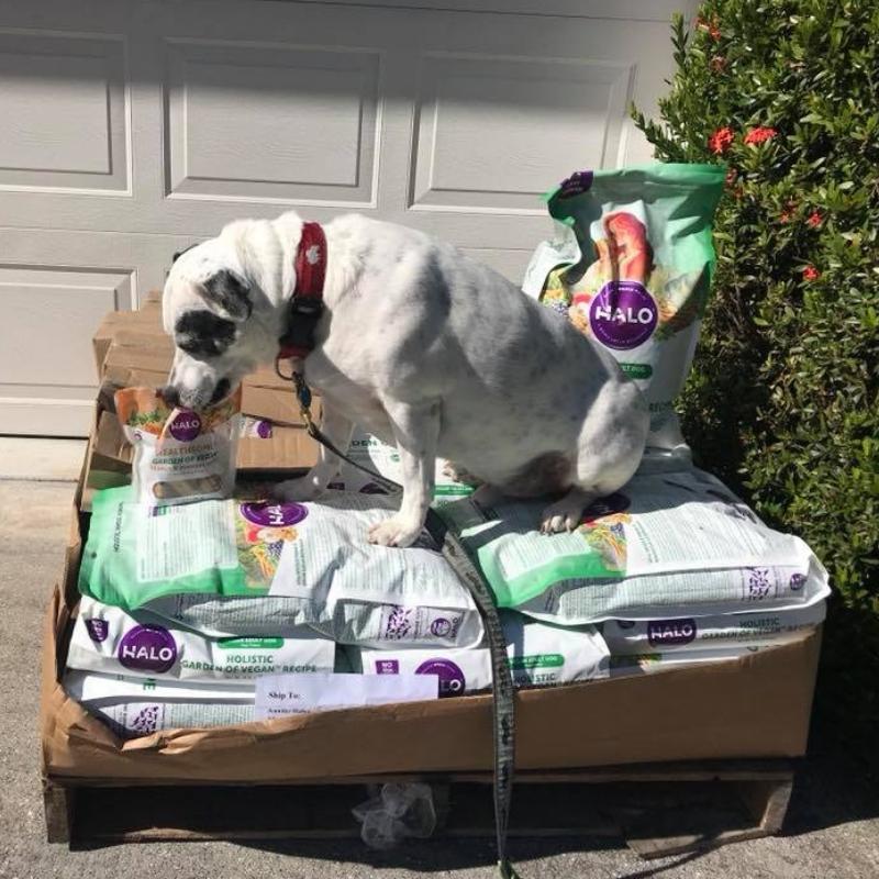 Radcliff Checks Out His Winnings. He loves Halo Healthsome® Garden of Vegan® Grain Free Peanut n' Pumpkin Vegan Dog Treats!