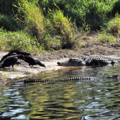 Florida Travel: Hiking Myakka River State Park's Deep Hole