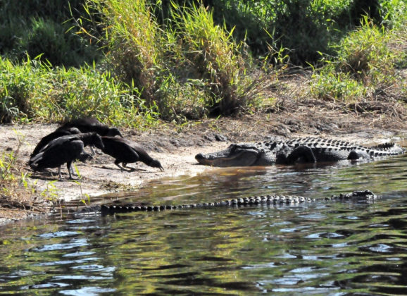 Florida Travel: Hiking Myakka River State Park's Deep Hole