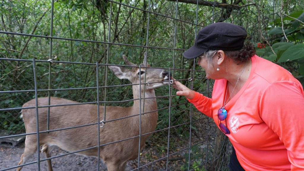 Meeting John Deer, a White-tailed Deer Perpetually in His Velvet at Lions, Tigers & Bears, Inc., in Arcadia, Fla.