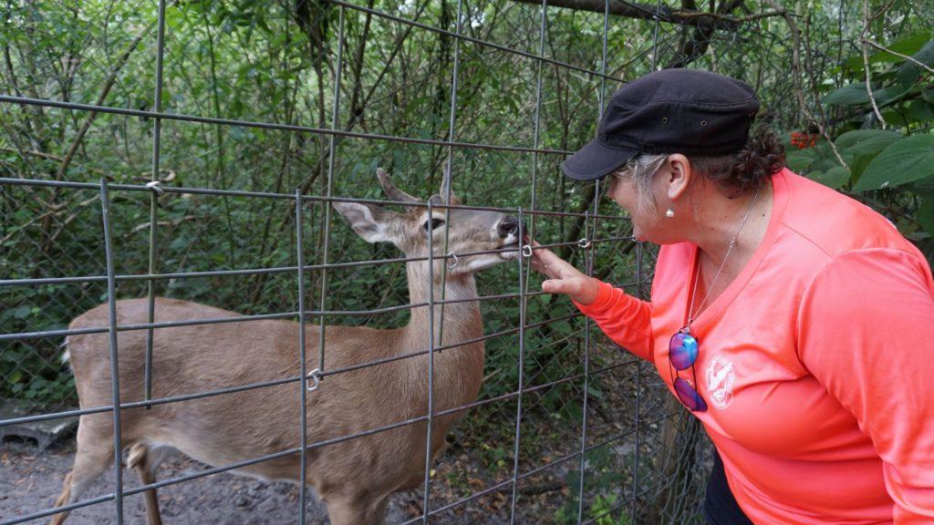 Meeting John Deer, a White-tailed Deer Perpetually in His Velvet at Lions, Tigers & Bears, Inc., in Arcadia, Fla.