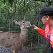 Florida Travel: Exotic Wildlife Refuge in Arcadia