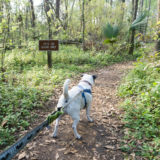 Florida Travel: Quick Visit to Alfred B. Maclay Gardens State Park with My Dog