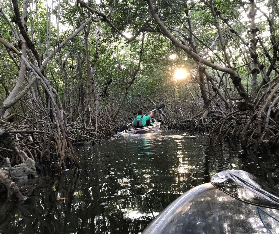 Navigating Through a Mangrove Tunnel with Island Ferry Eco Tours in Shell Key Preserve, Tierra Verde, Fla.
