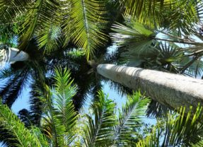 Florida Travel: Sunken Gardens, a Paradise in the City