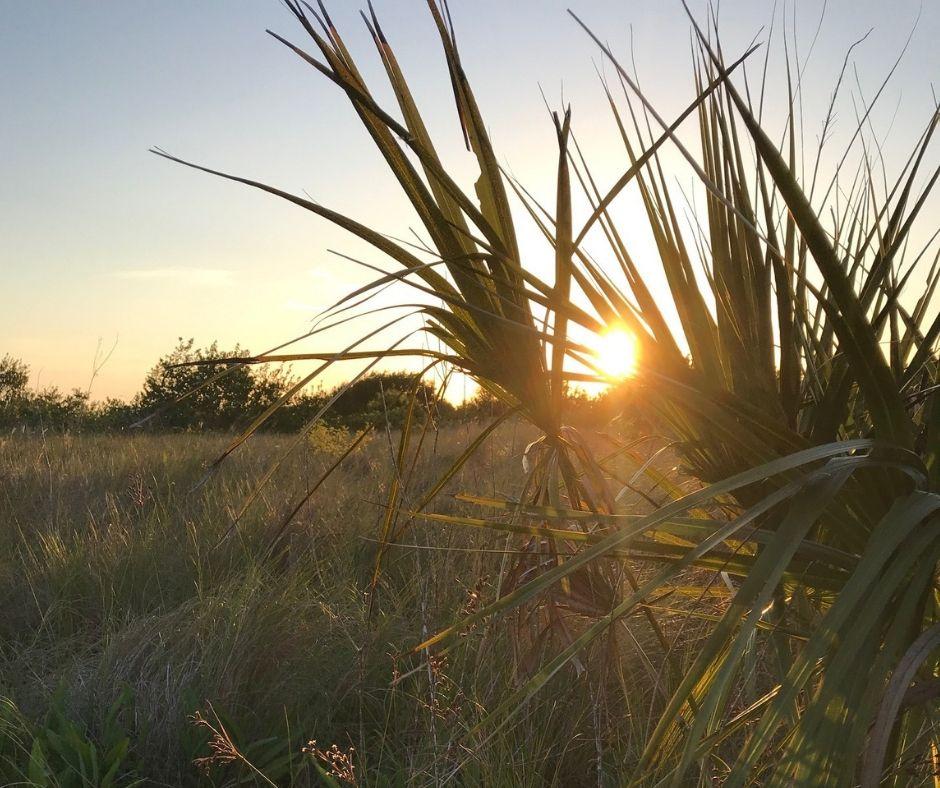 Sunset on Shell Key in Shell Key Preserve, Tierra Verde, Fla.