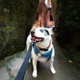 Road Trip with a Dog: Rock City, Georgia