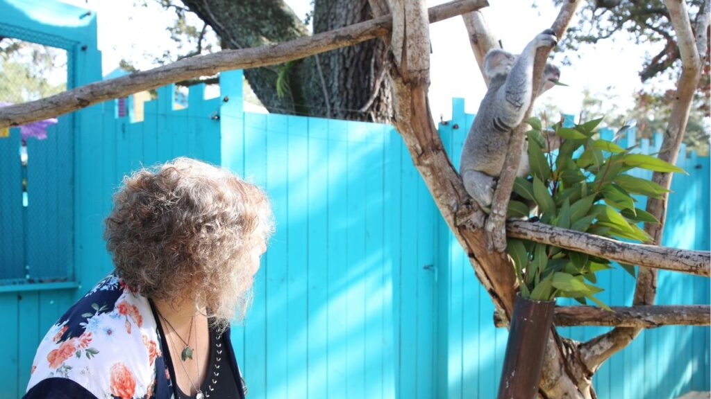 That's Me Watching Heathcliff Munch on a Eucalyptus Leaf During the ZooTampa Koala Photo Encounter, Jan. 2020. Photo Credit: ZooTampa Koala Photo Encounter.