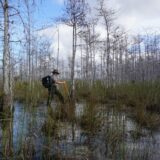 Florida Travel: Free Ranger Walks in Big Cypress National Preserve