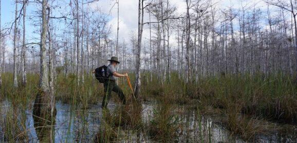 Florida Travel: Free Ranger Walks in Big Cypress National Preserve