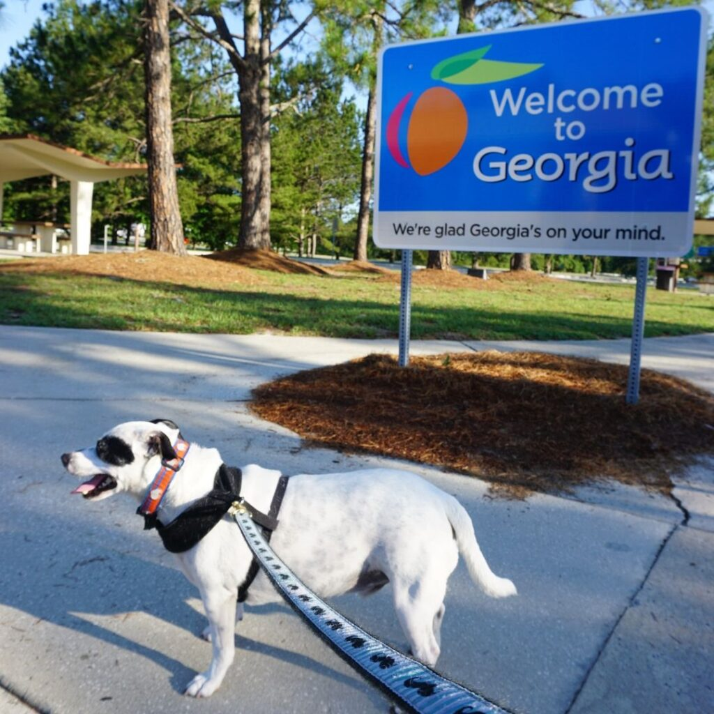 Is Georgia on Your Mind? It's on my Mine! This is a Rest Area Stop with my Dog Radlicff.
