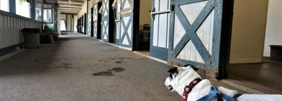Road Trip With a Dog: Kentucky Horse Park