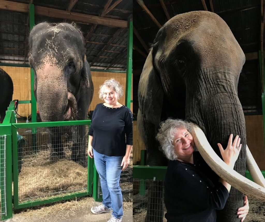 Me with Carol, an Asian Elephant, and Lou, an African Elephant at Myakka Elephant Ranch in East Manatee County, Fla.