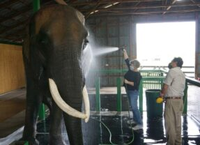 Spa Day at Myakka Elephant Ranch in Florida