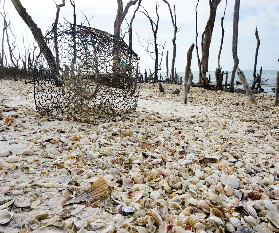 A Crab Trap Sits on a Bed of Seashells on Kice Island in the Ten Thousand Islands, Fla., Feb. 2021.