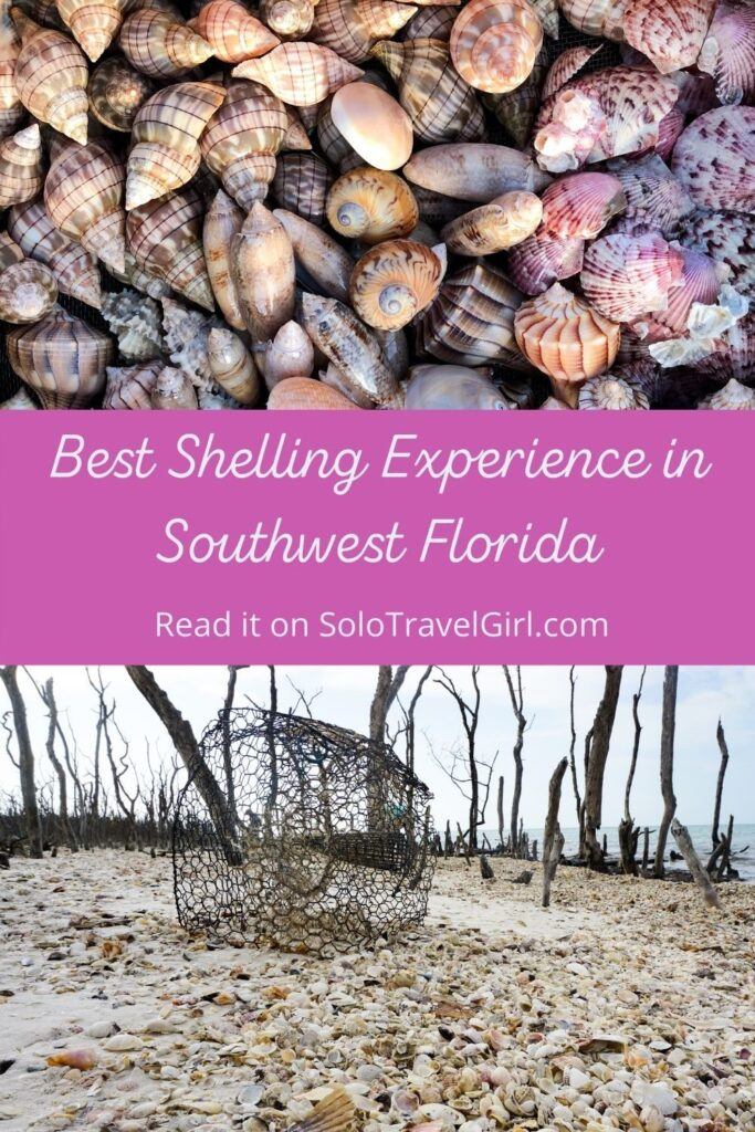 Pinterest Pin - Best Shelling Experience in Southwest Florida