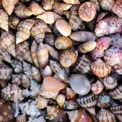 Tips for Planning a Shelling Vacation in Southwest Florida