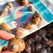 Best Shelling Experience in Southwest Florida: Treasure Seekers Shell Tours