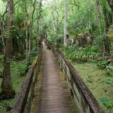 10 Reasons to Love Highlands Hammock State Park in Sebring, Florida