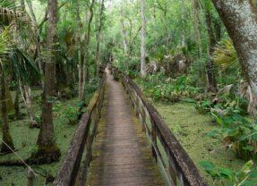 10 Reasons to Love Highlands Hammock State Park in Sebring, Florida
