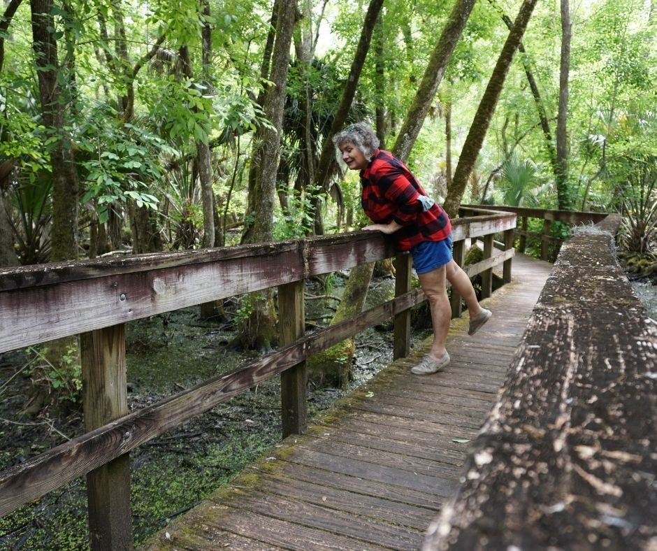 Stopping Along a Boardwalk Trail to Appreciate the Swamp in Highlands Hammock State Park, Fla.