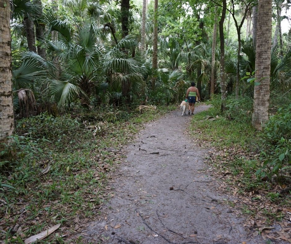 Dogs are a Great Hiking Companion and Welcome on Most Trails in Highlands Hammock State Park in Sebring, Fla.