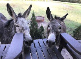 This Sweet Florida Glamping Spot Has Donkeys!